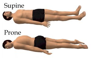 en.wikipedia.org_sleeping supine and prone