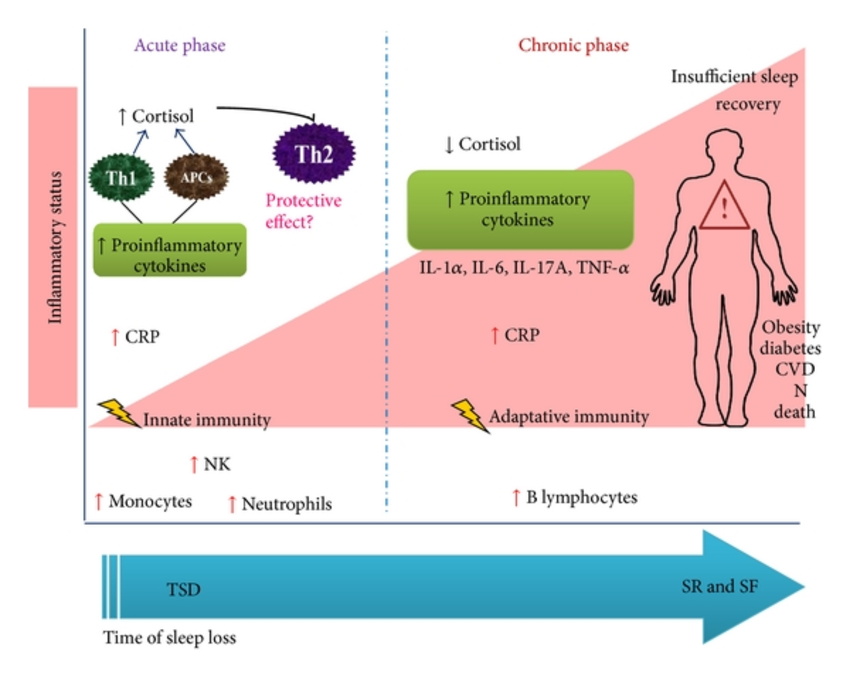 ( Cytokines and Sleep Loss - Image Courtesy of www.researchgate.net )